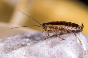 Come allontanare gli insetti da casa